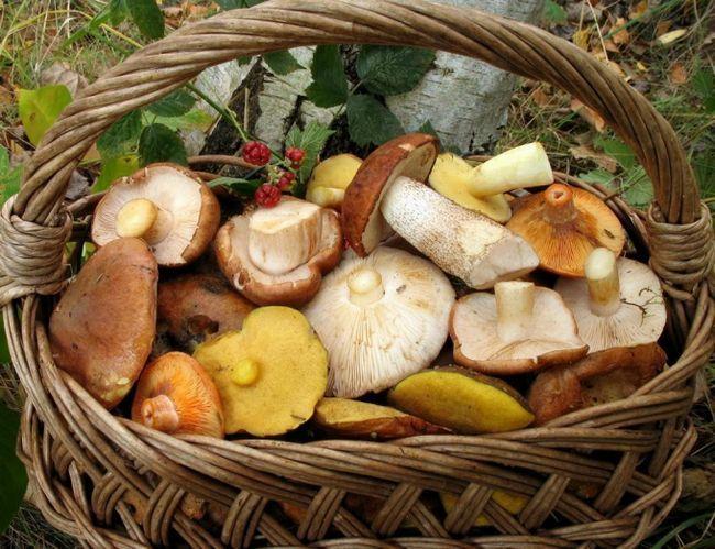 Що потрібно знати про грибах