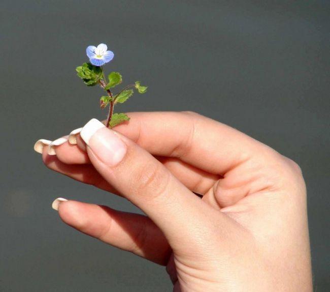 Як відростити швидко довгі нігті