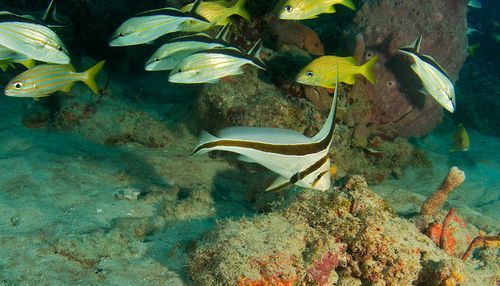 як розводити рибок