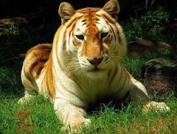 Які тварини самі рідкісні