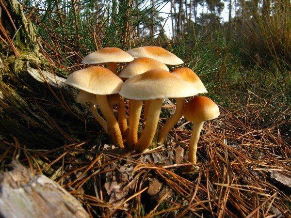 Чому не можна збирати гриби